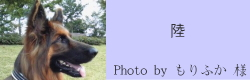 陸|ビヨルキス ハーフチョークカラー BJORKIS|HAU ビヨルキス、北欧犬グッズ通販