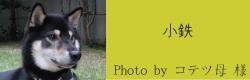 小鉄|ビヨルキス ハーフチョークカラー BJORKIS|HAU ビヨルキス、北欧犬グッズ通販