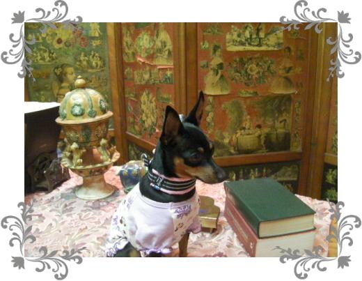 真央1|ビヨルキス ハーフチョークカラー BJORKIS|HAU ビヨルキス、北欧犬グッズ通販