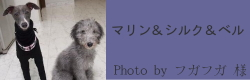 マリン&シルク&ベル|フィンランドハンドメイドカラー フリース付 inspired by sofi|HAU ビヨルキス、北欧犬グッズ通販