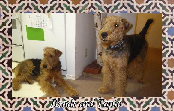 Beads & Tapio|ビヨルキス ハーフチョークカラー BJORKIS|HAU ビヨルキス、北欧犬グッズ通販
