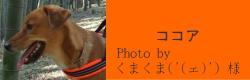 ココア|HAU ビヨルキス、北欧犬グッズ通販