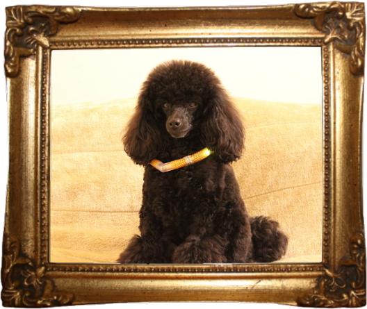 凛1|HAU Gallery|ビヨルキス,北欧犬グッズ通販HAU