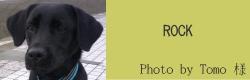 ROCK|ビヨルキス ハーフチョークカラー BJORKIS|HAU ビヨルキス、北欧犬グッズ通販