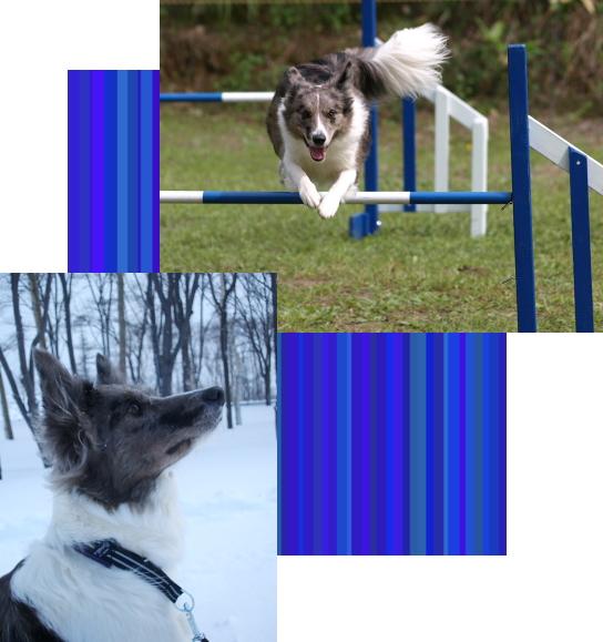 ジル2|ビヨルキス ハーフチョークカラー BJORKIS|HAU ビヨルキス、北欧犬グッズ通販