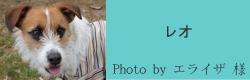 レオ|ビヨルキス ハーフチョークカラー BJORKIS|HAU ビヨルキス、北欧犬グッズ通販