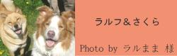ラルフ&さくら|ビヨルキス ナイロンリード BJORKIS|HAU ビヨルキス、北欧犬グッズ通販