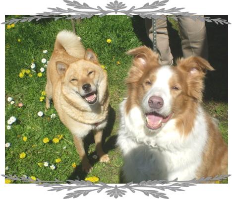ラルフ&さくら1|ビヨルキス ナイロンリード BJORKIS|HAU ビヨルキス、北欧犬グッズ通販