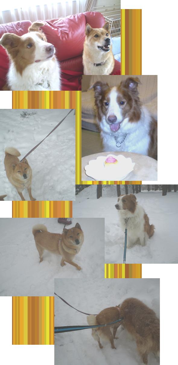 ラルフ&さくら2|ビヨルキス ナイロンリード BJORKIS|HAU ビヨルキス、北欧犬グッズ通販