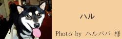 ハル|Twins フード&ウォーターボウル Gino the Dog|HAU ビヨルキス、北欧犬グッズ通販