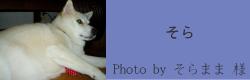そら|フィンランドハンドメイドカラー inspired by sofi|HAU ビヨルキス、北欧犬グッズ通販