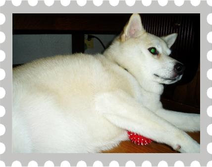 そら1|フィンランドハンドメイドカラー(イエローストライプ) inspired by Sofi|HAU ビヨルキス、北欧犬グッズ通販