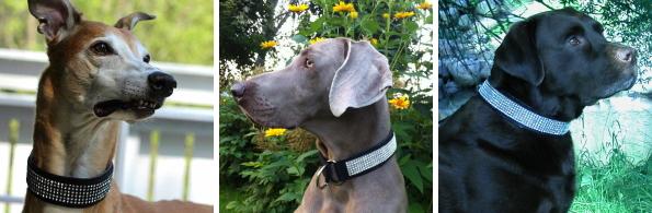 犬の首輪(ハーフチョークカラー)|AMOKEN シルバーブリング 首元を引き立てるクールな首輪です|犬グッズ通販HAU(ハウ)