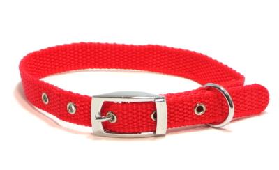 首輪(ベルトタイプ、ナイロン|HAU的犬グッズ講座