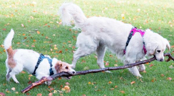 小型犬用、中型犬用、大型犬用におすすめ|ドッグコペンハーゲン コンフォートウォークプロハーネス|犬グッズ通販HAU