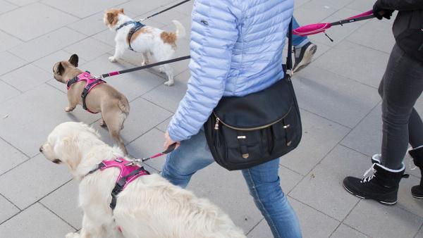 北欧デザインのおしゃれな犬用リード|ドッグコペンハーゲン アーバントレイルリーシュ|犬グッズ通販HAU