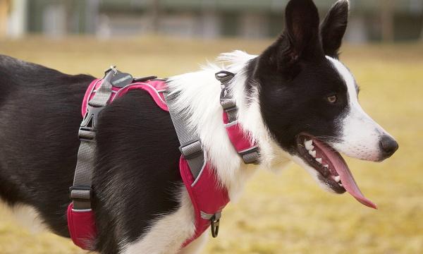 製品特徴・長所(メリット)・おすすめポイント|ドッグコペンハーゲン コンフォートウォークプロハーネス|犬グッズ通販HAU