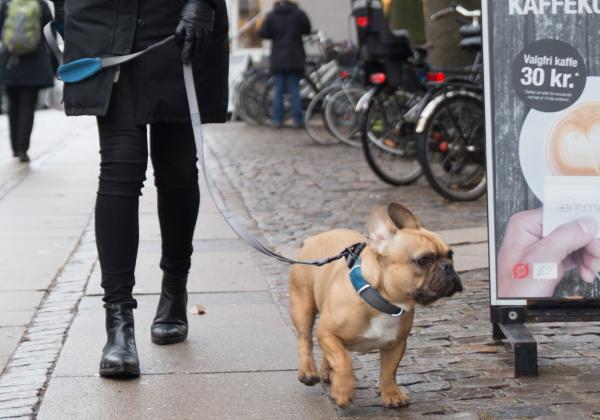 お散歩、アウトドアにおすすめ|ドッグコペンハーゲン アーバントレイルリーシュ|犬グッズ通販HAU