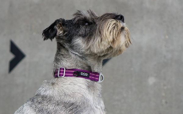 ナイロンウェビングとプラスチックバックルのシンプルな構造|ドッグコペンハーゲン アーバンスタイルカラー|犬グッズ通販HAU