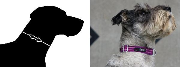 犬の首輪、おすすめのサイズ選び測定方法|ドッグコペンハーゲン アーバンスタイルカラー|犬グッズ通販HAU