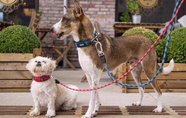 軽くて丈夫なデンマーク犬用首輪(ドッグカラー)|ドッグコペンハーゲン アーバンエクスプローラー|犬グッズ通販HAU