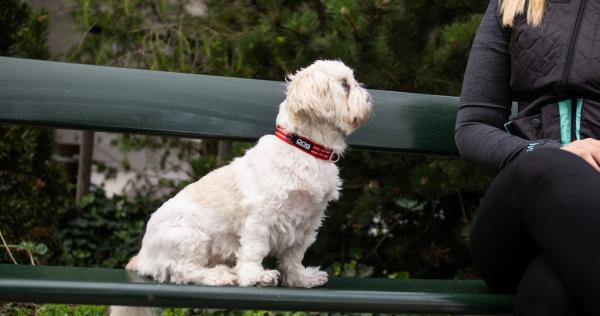 チワワ、イタグレ、プードルなどの小型犬におすすめの犬用首輪|犬グッズ通販HAU
