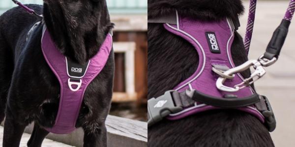 2カ所のリード金具(Dカン)つき|ドッグコペンハーゲン コンフォートウォークプロハーネス|犬グッズ通販HAU
