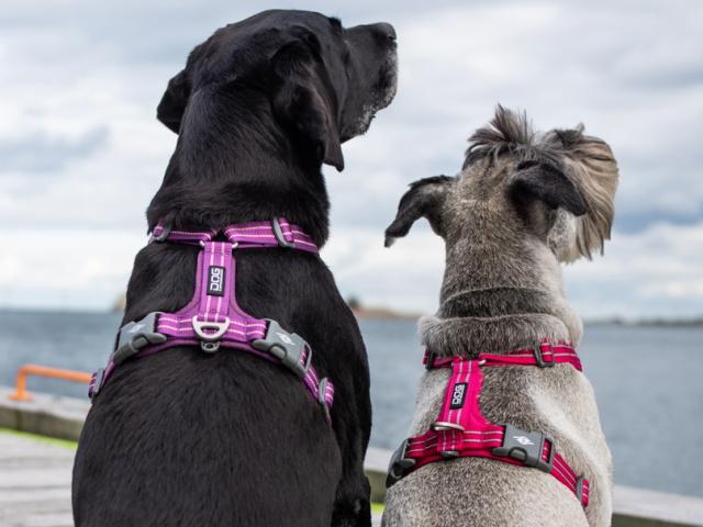 小型犬用、中型犬用、大型犬用におすすめ|ドッグコペンハーゲン コンフォートウォークエアハーネス|犬グッズ通販HAU