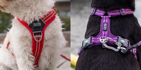 2カ所のリード金具(Dカン)つき|ドッグコペンハーゲン コンフォートウォークエアハーネス|犬グッズ通販HAU