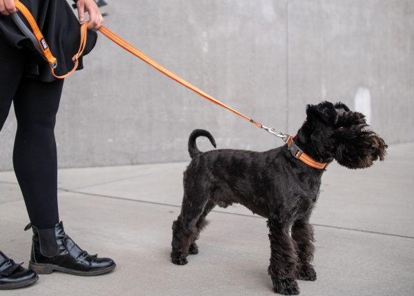 お散歩、アウトドアにおすすめ|ドッグコペンハーゲン アーバンフリースタイルリーシュ|犬グッズ通販HAU