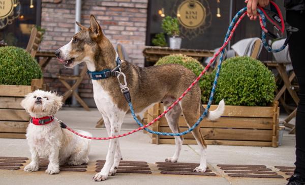 使いやすい、柔らかく丈夫なロープ製リード|ドッグコペンハーゲン アーバンロープリーシュ|犬グッズ通販HAU