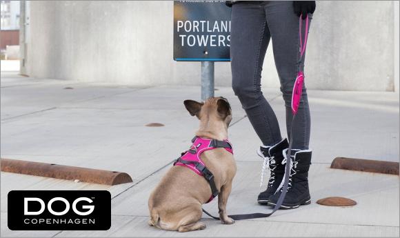 人気のドッグコペンハーゲンおすすめ犬用首輪、ハーネス、リードが入荷|犬グッズ通販HAU
