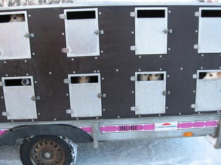 そり犬カー2|犬グッズ通販HAU 北欧旅行記