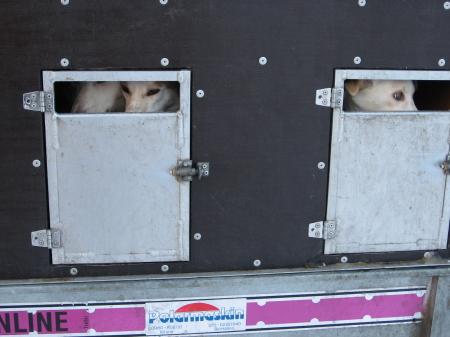 そり犬カー3|犬グッズ通販HAU 北欧旅行記
