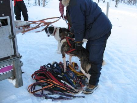 ハーネス装着中|犬グッズ通販HAU 北欧旅行記