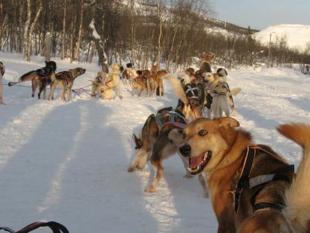 犬ぞり準備中2|犬グッズ通販HAU 北欧旅行記