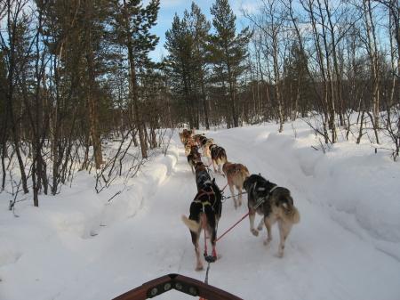 犬ぞり出発|犬グッズ通販HAU 北欧旅行記