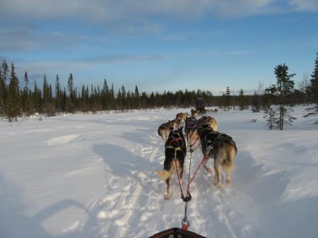 走るそり犬2|犬グッズ通販HAU 北欧旅行記