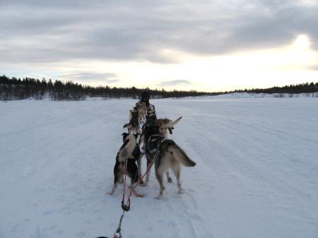 走るそり犬3|犬グッズ通販HAU 北欧旅行記