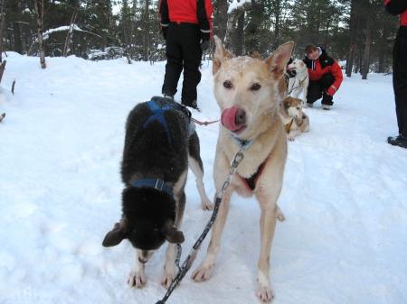 ワンコ休憩中|犬グッズ通販HAU 北欧旅行記