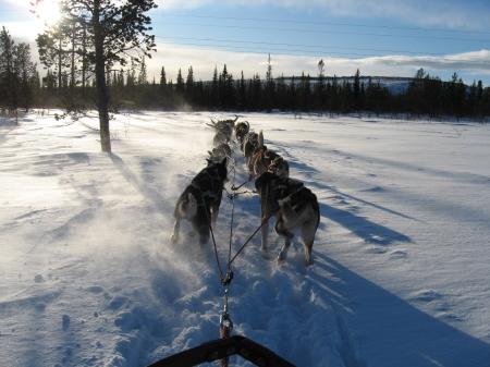 犬ぞり再出発|犬グッズ通販HAU 北欧旅行記
