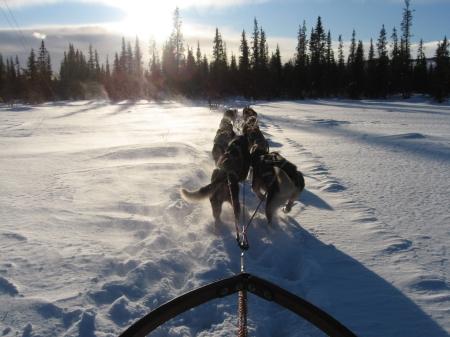 走るそり犬5|犬グッズ通販HAU 北欧旅行記