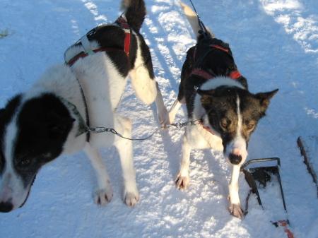 犬ぞり終了|犬グッズ通販HAU 北欧旅行記