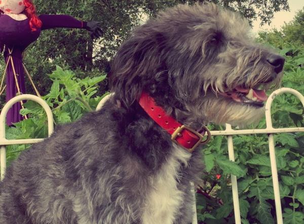 おしゃれな革製犬のお散歩用首輪|モノグラムレザードッグカラー|犬グッズ通販HAU