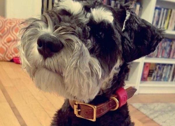 おしゃれな革製犬のお散歩用首輪|モノグラムラグジュアリーブライドルレザードッグカラー パッド付 グッズ通販HAU