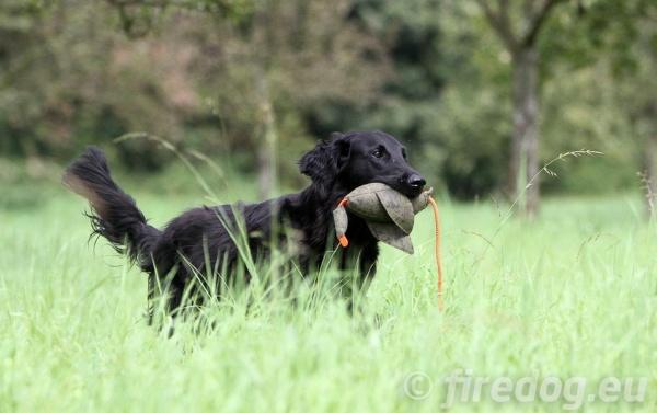 コード(ロープ)付きで簡単に遠くまで投げることができる犬のおもちゃ、ダミー 犬グッズ通販HAU