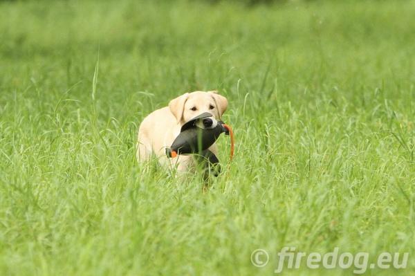 犬のおもちゃ(ドッグトイ)ドッグラン、水に浮く|中型犬、大型犬におすすめ|FIREDOG ダックダミー 400g|犬グッズ通販 HAU(ハウ)