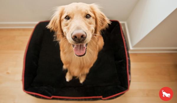 犬用ベッド|p.l.a.y ラグジュアリーペット用おすすめの犬のベッド|犬グッズ通販HAU