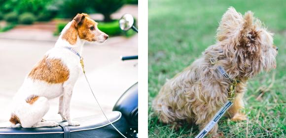 スタイリッシュ&おしゃれな犬用首輪|See Scout Sleep ヘンプカラー 幅1/2