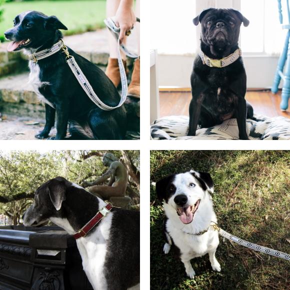 スタイリッシュ&おしゃれな犬用首輪|See Scout Sleep ヘンプカラー 幅1
